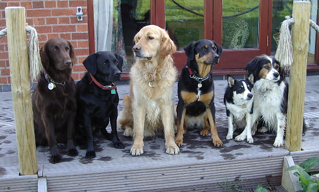 dogs on decking